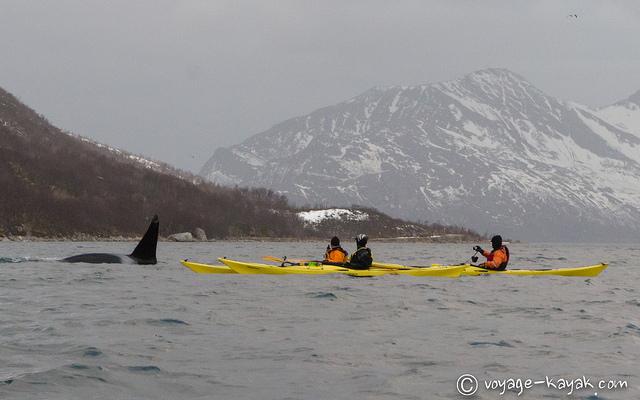 Sea kayak winter trip in Norway - Whales - Northern Lights